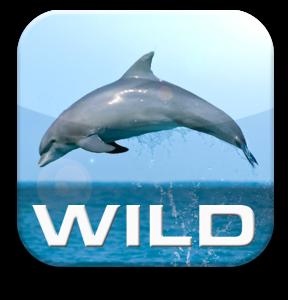 Wild Dolphins App Icon